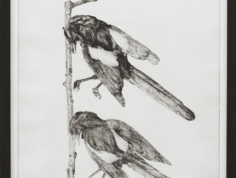 Next year's bones don't smell clean yet: magpies