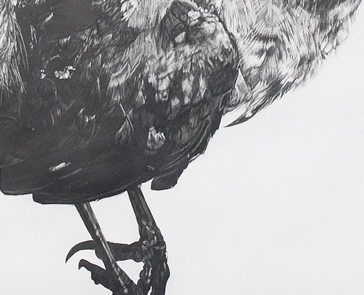 Next year's bones don't smell clean yet: blackbird (2012)