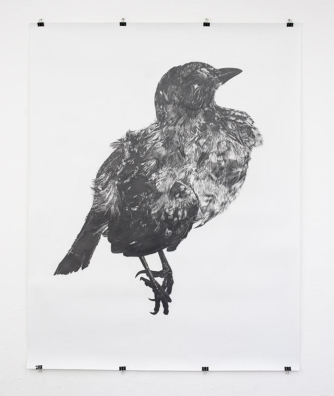 Next year's bones don't smell clean yet: blackbird