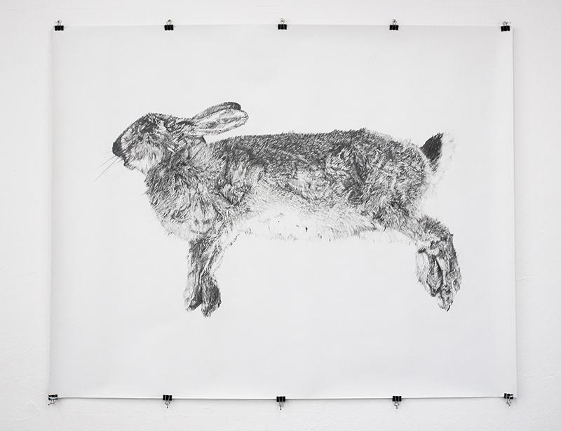 Next year's bones don't smell clean yet: rabbit