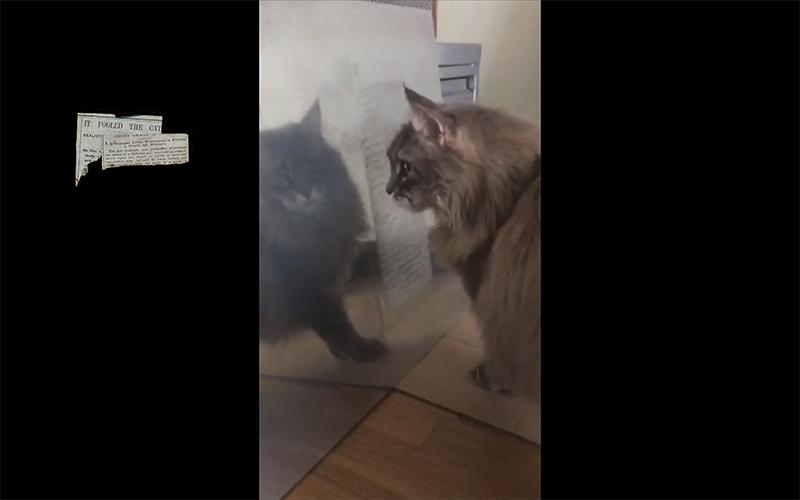 Fooled the cat